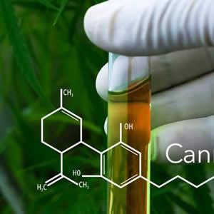 Kanabinoidi konoplje in CBD (kanabidiol)